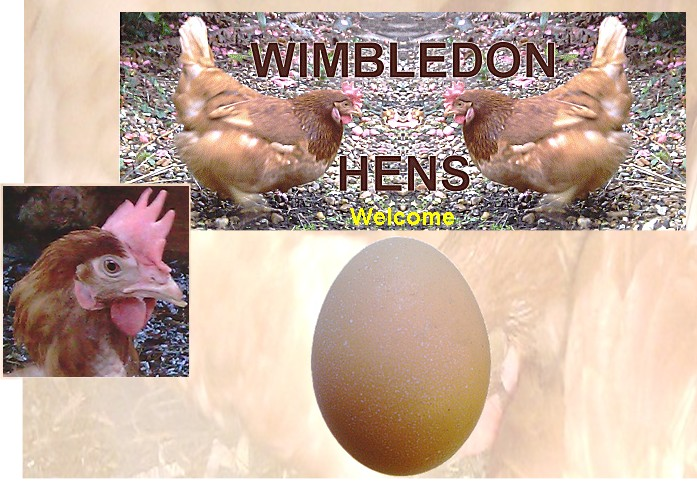 "WIMBLEDON HENS - FREE-RANGE EGGS ""AND THE HENS ARE HAPPY"""